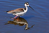 Blk Neck Stilt  378