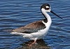 Blk Neck Stilt  454 7X10