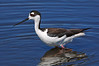 Blk Neck Stilt  397