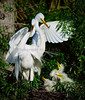 Egrets Great 1780 a