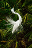 Egret Great 8466 a