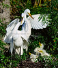 Egrets Great 1780