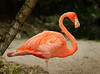 Flamingo 2192
