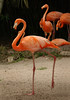 Flamingo 2313
