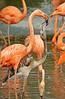Flamingos 814