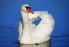 Swan 515  a