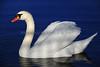 Swan 486 a