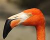 Flamingo2090