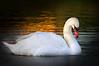 Swan 5091 a