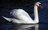 Swan 709