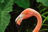Flamingo 4244
