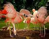 Flamingos 8383