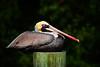 Pelican 772 a
