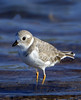 Plover Piping 8373