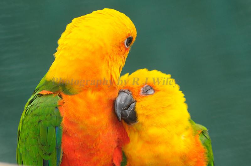 Birds 9015