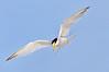 Tern Least 5941