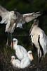 Stork family 4042