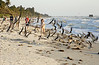 Naples Beach 0501