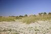 Tybee Island 6160