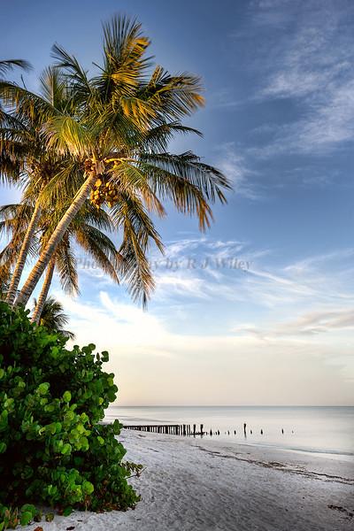 Beach Naples 7874