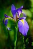 Iris 9124 a