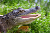 Gator 9639
