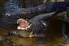 Gator 695