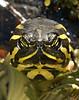 Turtle 5501