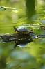 Turtle 0045