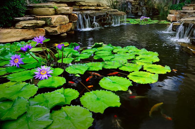 Koi Pond LaPlaya 8426