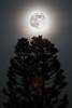 Super Moon 2014 1329