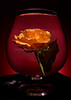 Last Nights Rose 4904