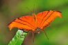 Insects Butterflys Dragonflys :
