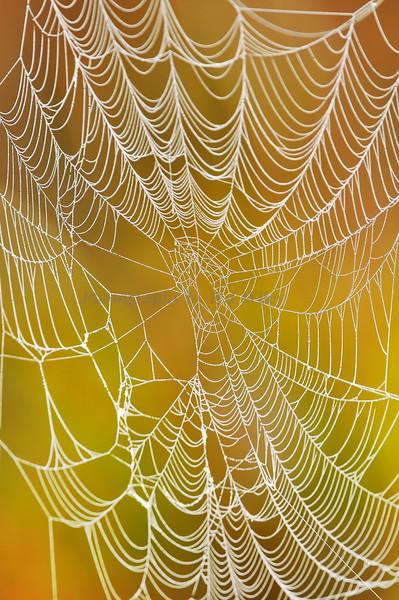 Spider web 5881