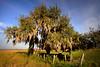Tree 8938