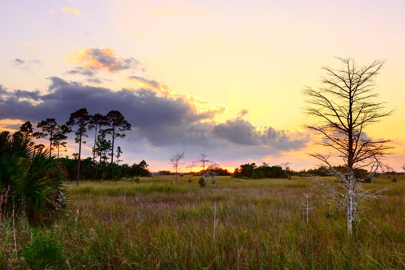 Everglades National Park 7811