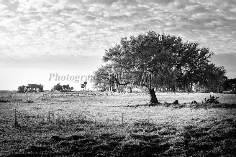 Ranch 166 bw