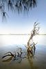 Everglades city8725