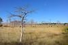 Big Cypress 9678