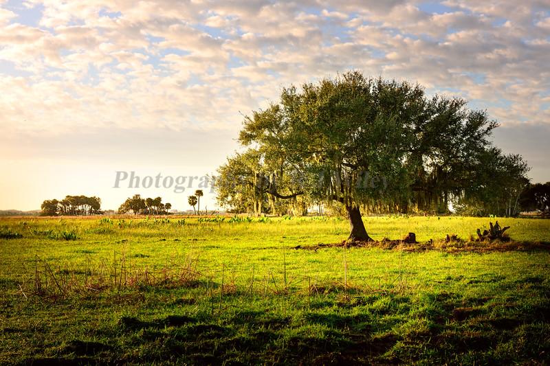 Ranch 166