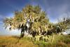 Tree 8949