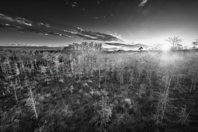 Big Cypress sunset 4332bw