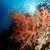 Jackfish Aley, Red Sea. 16 X 24 inches.<br /> Limited to 10 prints only.   $500.00 unframed.
