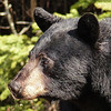 116 Black Bear, Highway 93