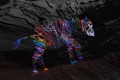 Zebra in Zion