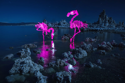 Full Moon Flamingos
