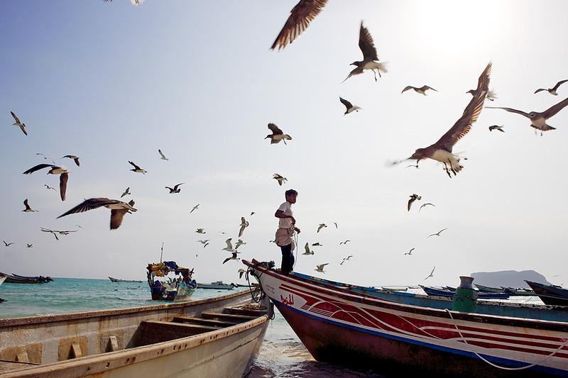 Fisherman and seagulls.