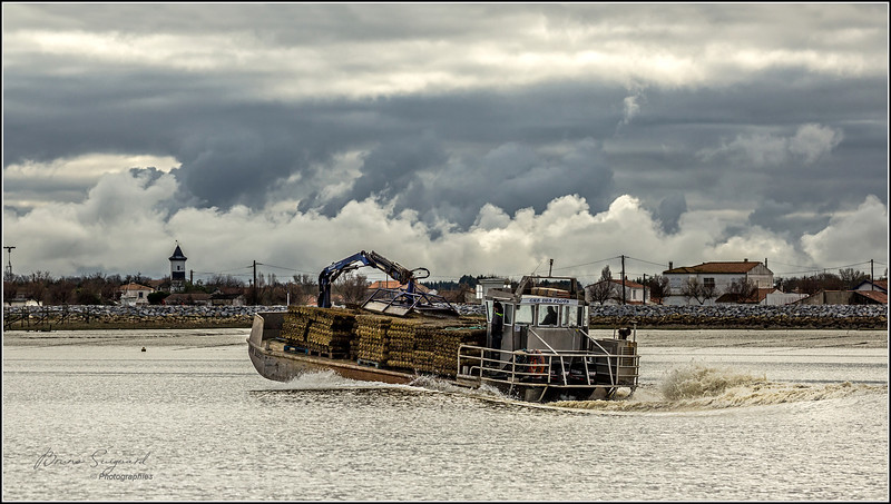 Oyster boat  -  Port des Barques