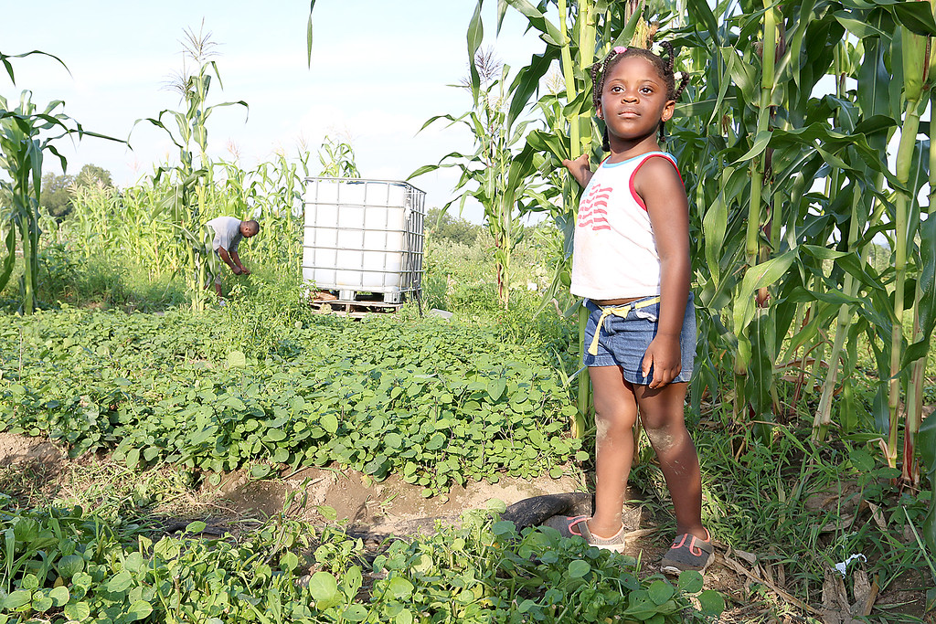 . Abigail Kwinji, 3, watches her mom Mercy Kwinji, both from Fitchburg, as she works in her garden at Sholan Farms in Leominster picking some Njama Njama a plant similar to spinach from her native country of Cameroon. In America it is know as Huckleberry she said.  SENTINEL & ENTERPRISE/JOHN LOVE