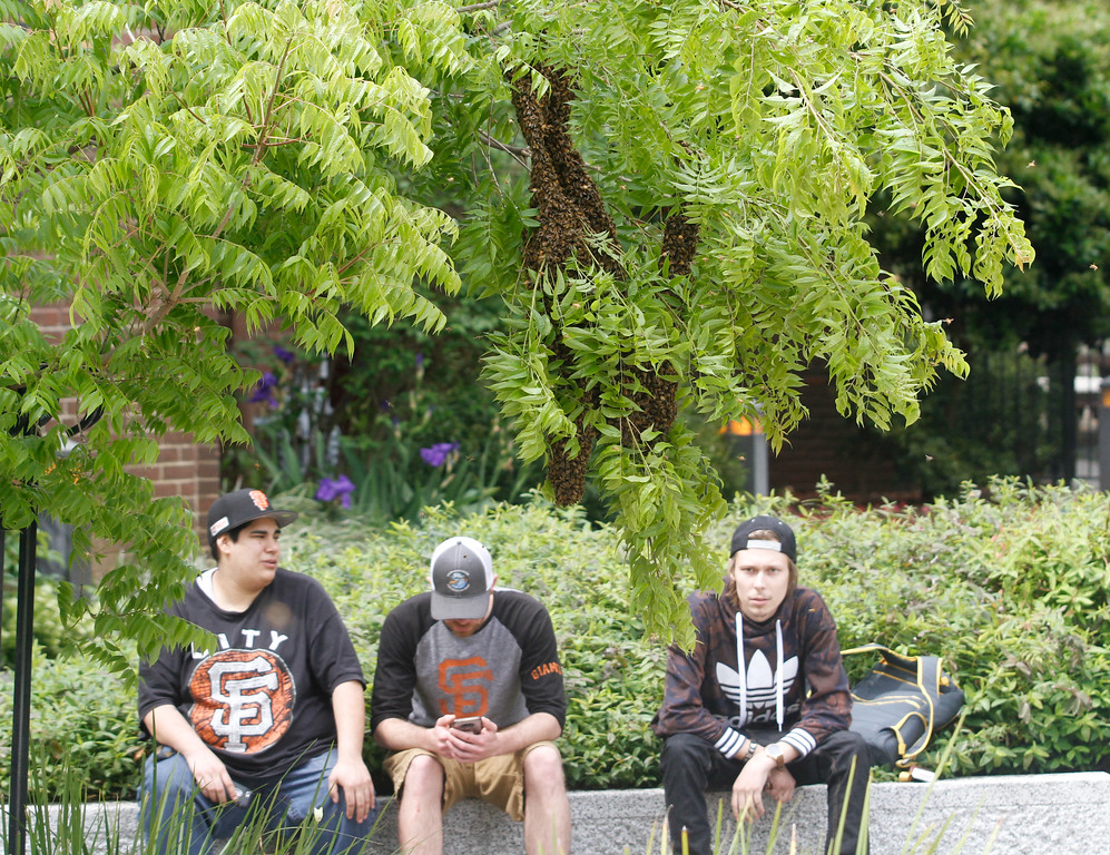 . Maddy Hays, Alex Clark and Ryan Snyder watch the swarm of bees and warn people as they walk or ride by to avoid the hive, there were a few close calls Wednesday April 18, 2017 in Chico, California.(Emily Bertolino -- Enterprise-Record)